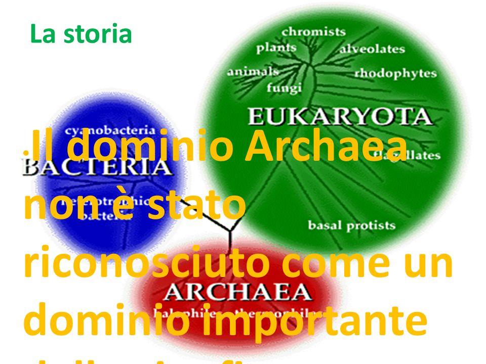 La storia Il dominio Archaea non è stato riconosciuto come un dominio importante della vita fino a poco tempo fa.
