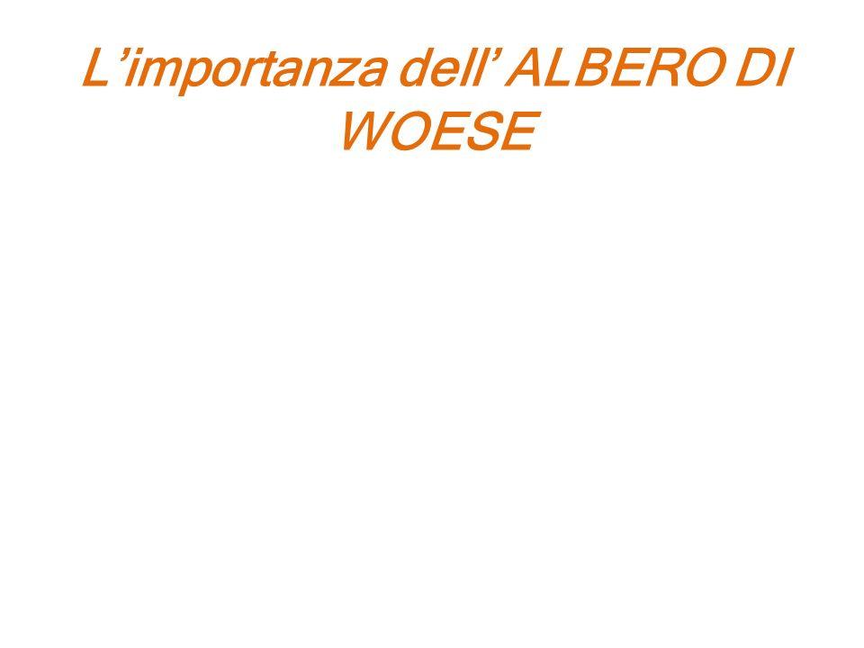 Limportanza dell ALBERO DI WOESE Rita Levi Montalcini afferma che limportanza di questa scoperta è triplice: 1) Ha fissato lorigine della vita a un pe