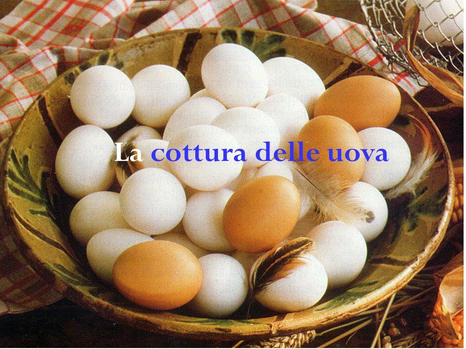 Dimensioni delle uova dei principali volatili da cortile