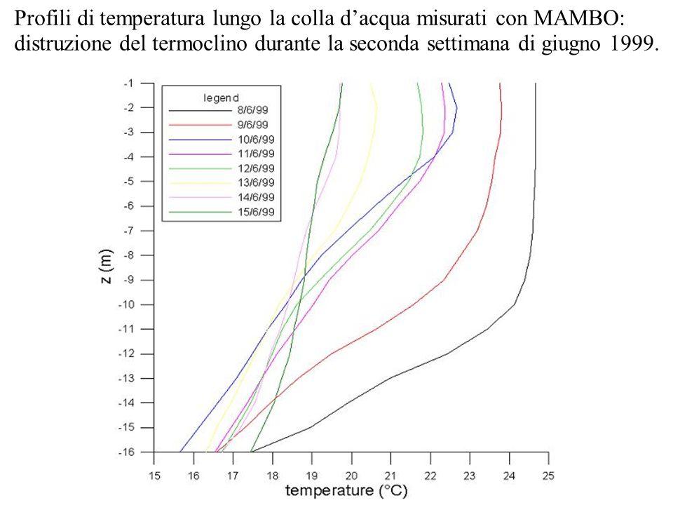 Profili di temperatura lungo la colla dacqua misurati con MAMBO: distruzione del termoclino durante la seconda settimana di giugno 1999.