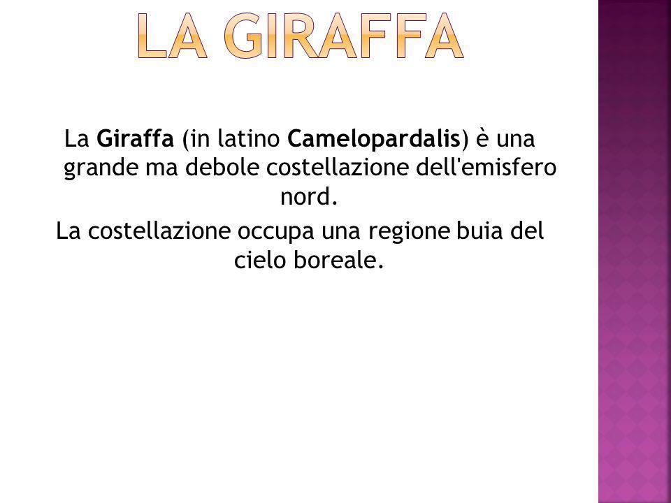 La Giraffa (in latino Camelopardalis) è una grande ma debole costellazione dell emisfero nord.