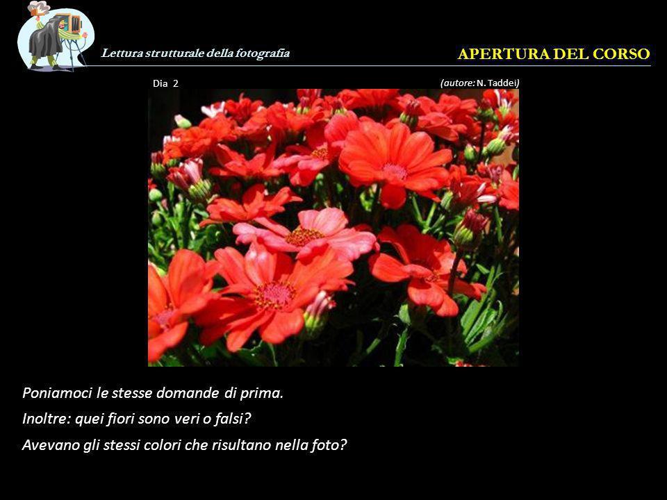Lettura strutturale della fotografia APERTURA DEL CORSO Dia 1 Che cosè questa fotografia.