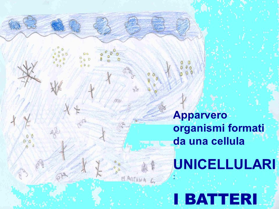 Apparvero organismi formati da una cellula UNICELLULARI : I BATTERI
