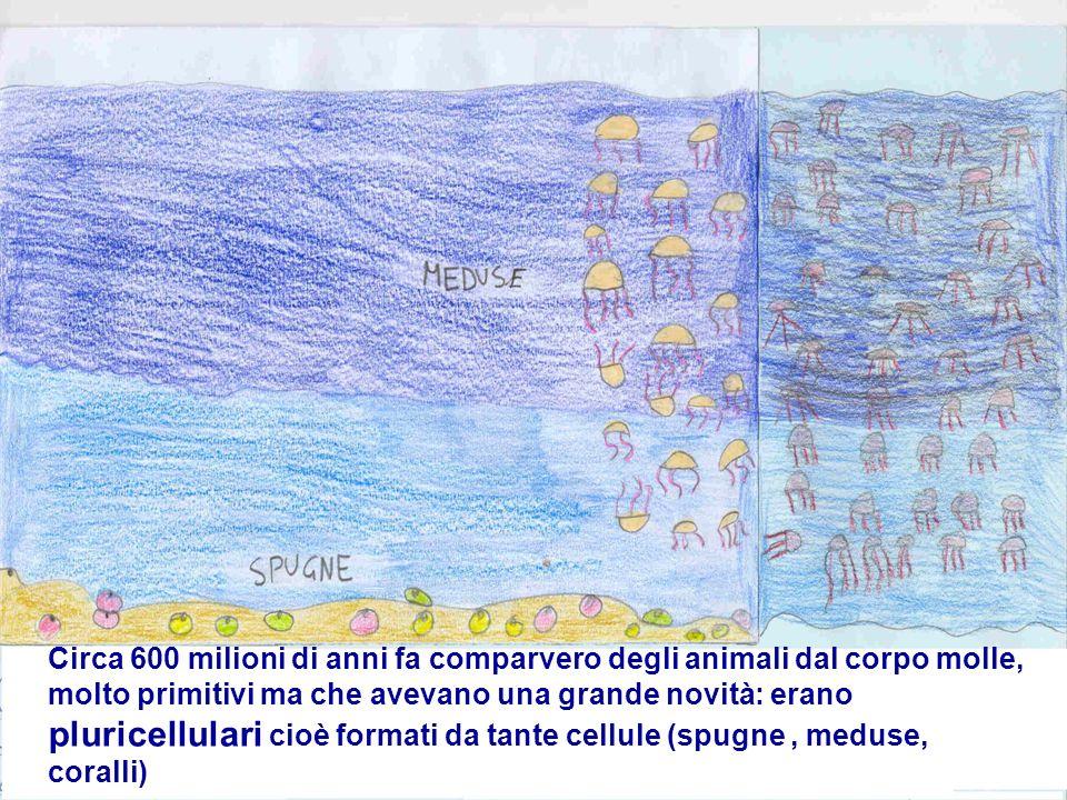 Circa 600 milioni di anni fa comparvero degli animali dal corpo molle, molto primitivi ma che avevano una grande novità: erano pluricellulari cioè for