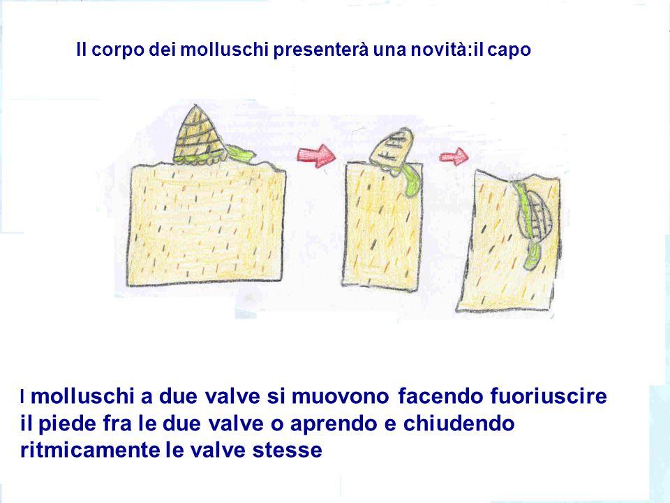 Il corpo dei molluschi presenterà una novità:il capo I molluschi a due valve si muovono facendo fuoriuscire il piede fra le due valve o aprendo e chiu