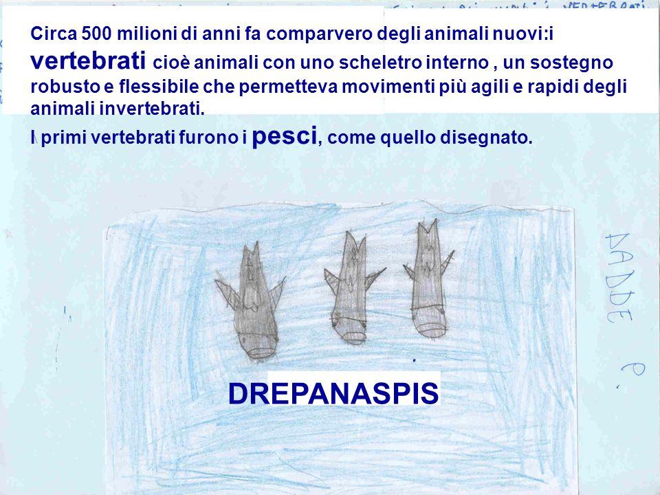 Circa 500 milioni di anni fa comparvero degli animali nuovi:i vertebrati cioè animali con uno scheletro interno, un sostegno robusto e flessibile che