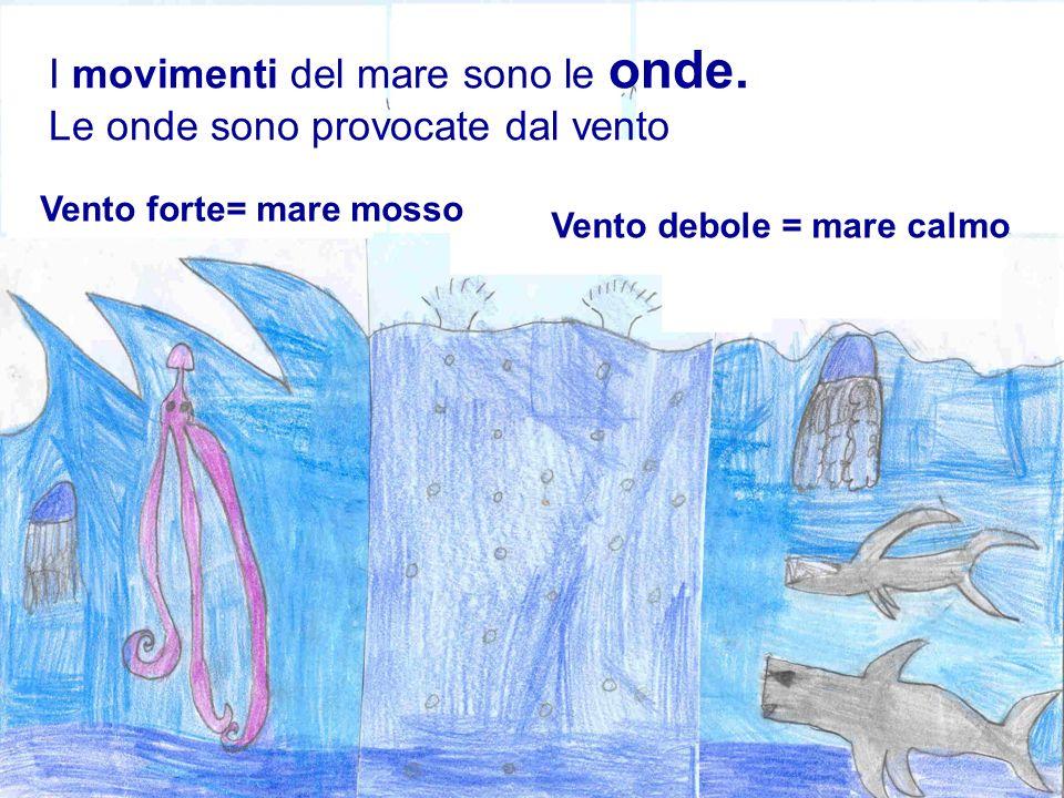 I movimenti del mare sono le onde. Le onde sono provocate dal vento Vento forte= mare mosso Vento debole = mare calmo