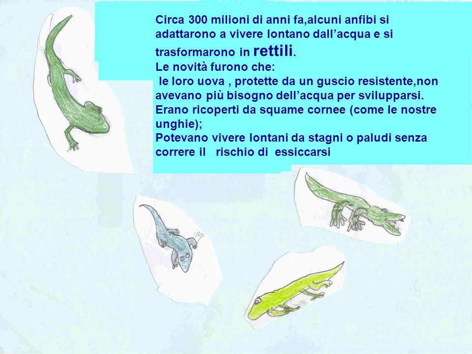 Circa 300 milioni di anni fa,alcuni anfibi si adattarono a vivere lontano dallacqua e si trasformarono in rettili. Le novità furono che: le loro uova,