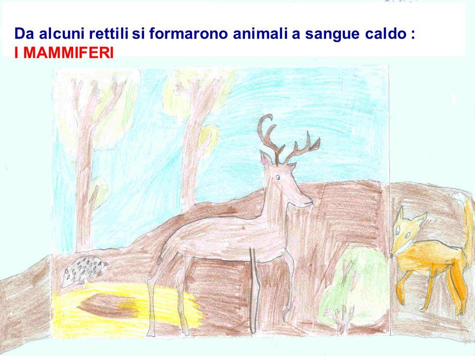 Da alcuni rettili si formarono animali a sangue caldo : I MAMMIFERI