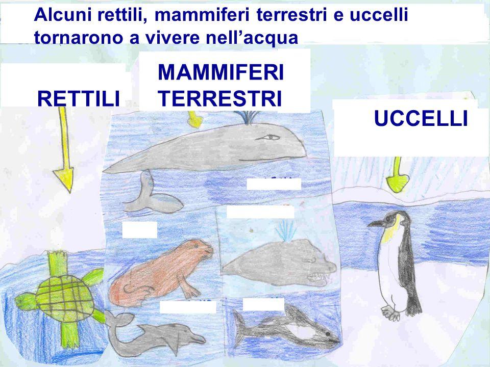 Alcuni rettili, mammiferi terrestri e uccelli tornarono a vivere nellacqua RETTILI MAMMIFERI TERRESTRI UCCELLI