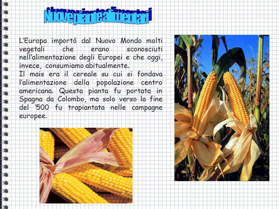 LEuropa importò dal Nuovo Mondo molti vegetali che erano sconosciuti nellalimentazione degli Europei e che oggi, invece, consumiamo abitualmente. Il m