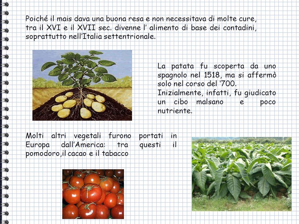 Poiché il mais dava una buona resa e non necessitava di molte cure, tra il XVI e il XVII sec. divenne l alimento di base dei contadini, soprattutto ne