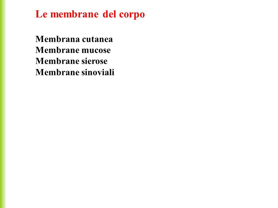 Le membrane del corpo Membrana cutanea Membrane mucose Membrane sierose Membrane sinoviali