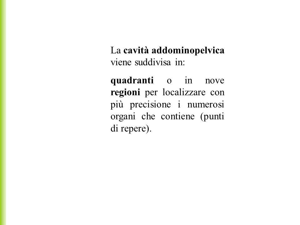 La cavità addominopelvica viene suddivisa in: quadranti o in nove regioni per localizzare con più precisione i numerosi organi che contiene (punti di