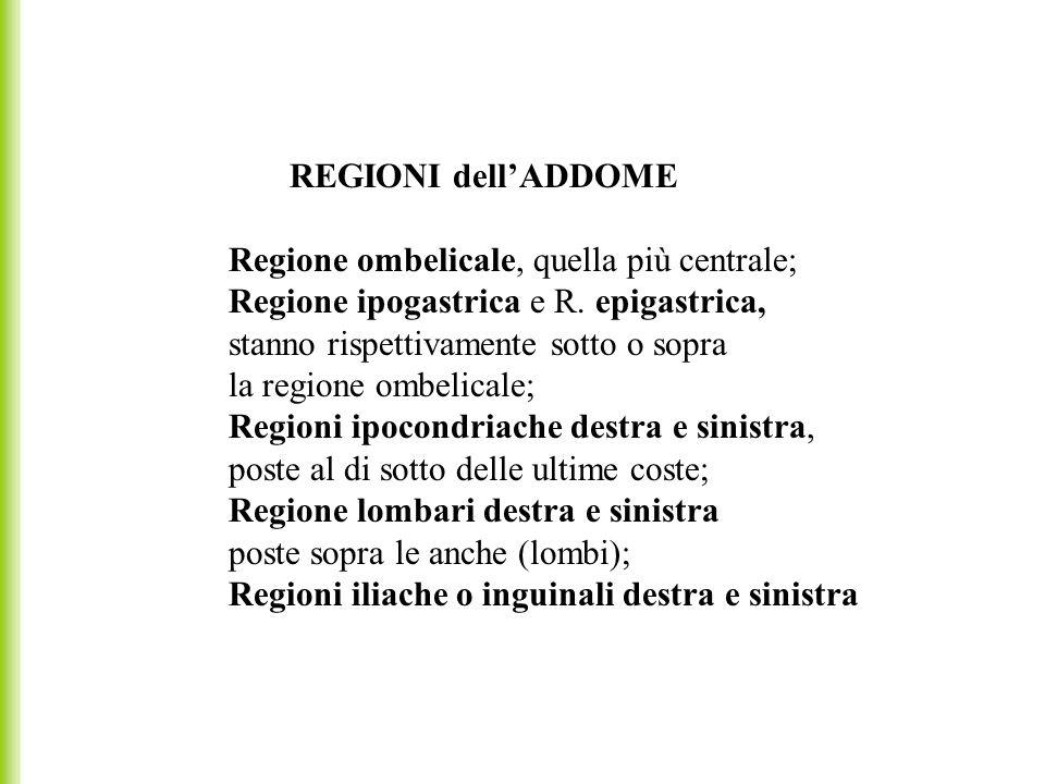 REGIONI dellADDOME Regione ombelicale, quella più centrale; Regione ipogastrica e R. epigastrica, stanno rispettivamente sotto o sopra la regione ombe