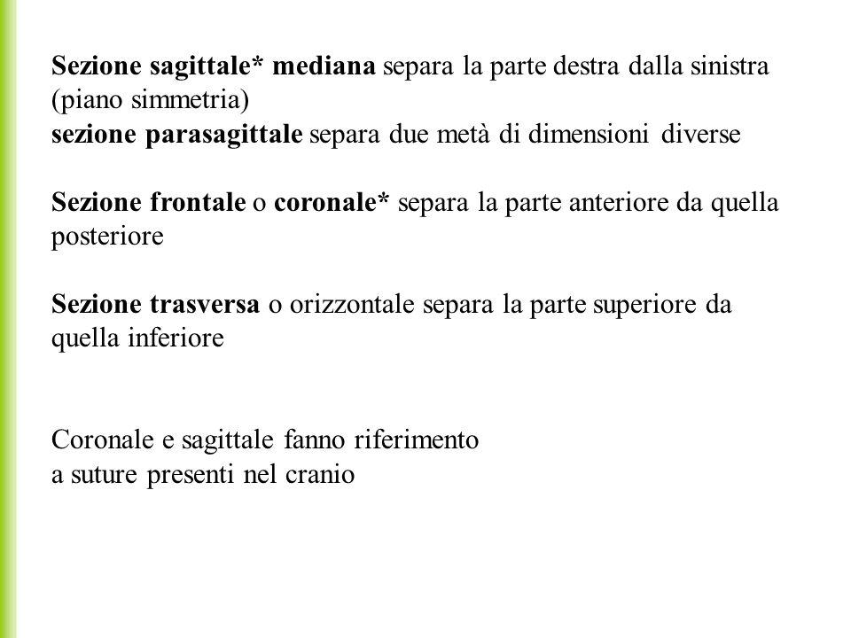 Sezione sagittale* mediana separa la parte destra dalla sinistra (piano simmetria) sezione parasagittale separa due metà di dimensioni diverse Sezione
