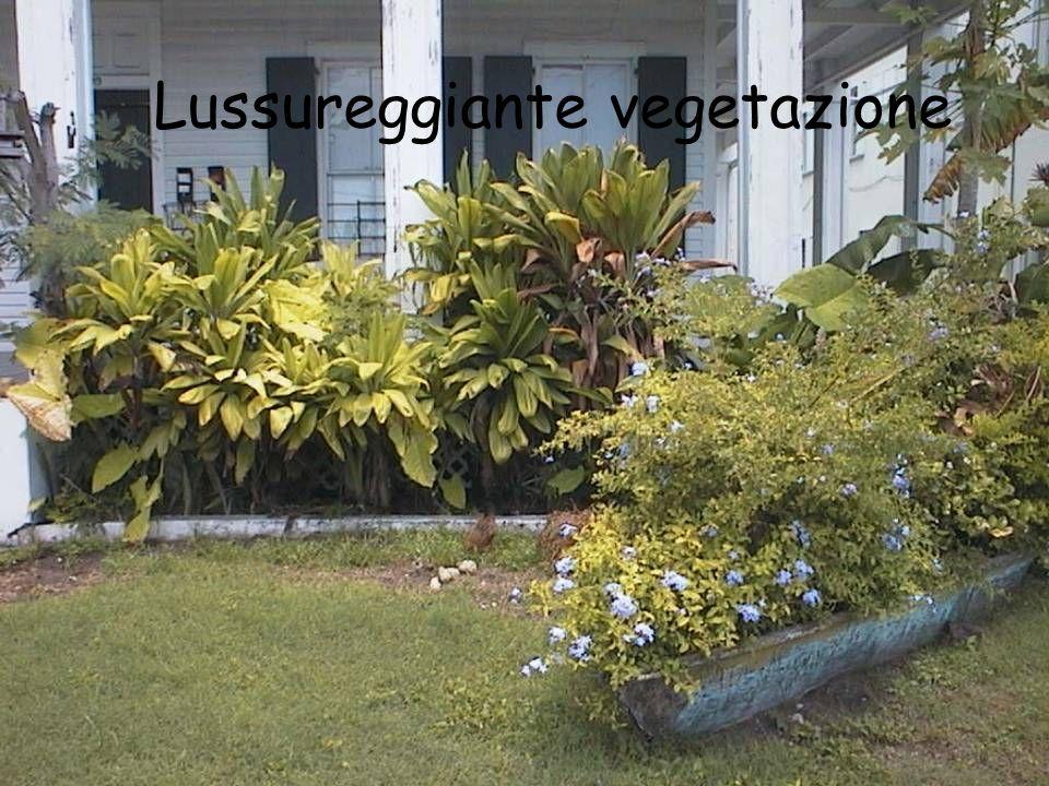 Lussureggiante vegetazione