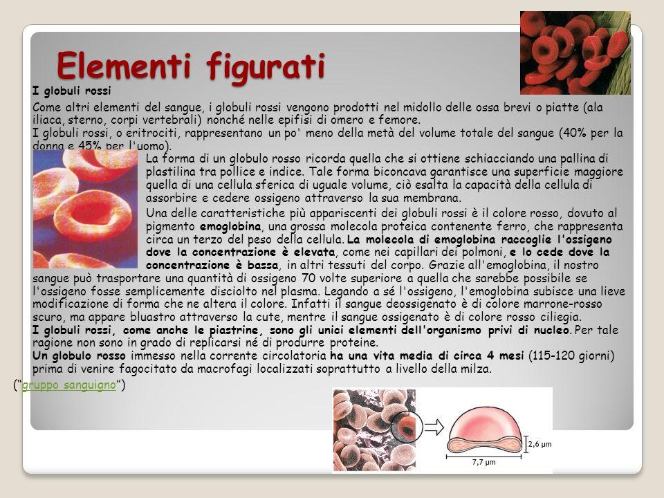 Elementi figurati I globuli rossi Come altri elementi del sangue, i globuli rossi vengono prodotti nel midollo delle ossa brevi o piatte (ala iliaca,
