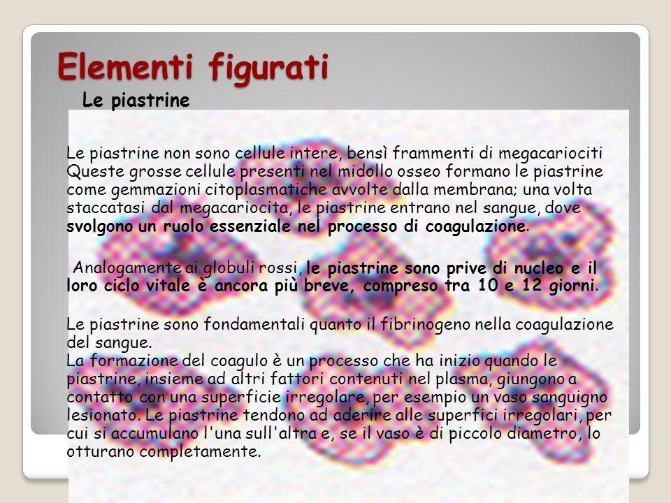 Elementi figurati Le piastrine Le piastrine non sono cellule intere, bensì frammenti di megacariociti Queste grosse cellule presenti nel midollo osseo