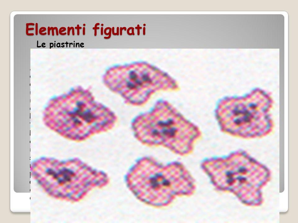 Elementi figurati Le piastrine A integrare il meccanismo provvede poi la coagulazione del sangue che costituisce la più importante delle difese dell'o