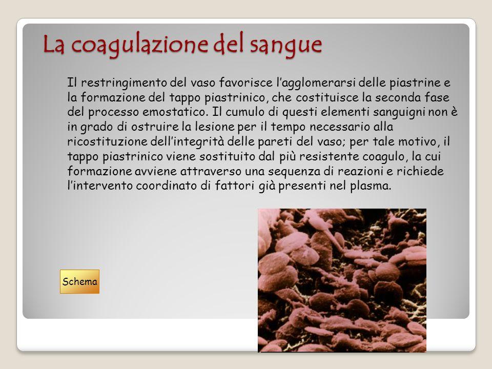 La coagulazione del sangue Il restringimento del vaso favorisce lagglomerarsi delle piastrine e la formazione del tappo piastrinico, che costituisce l