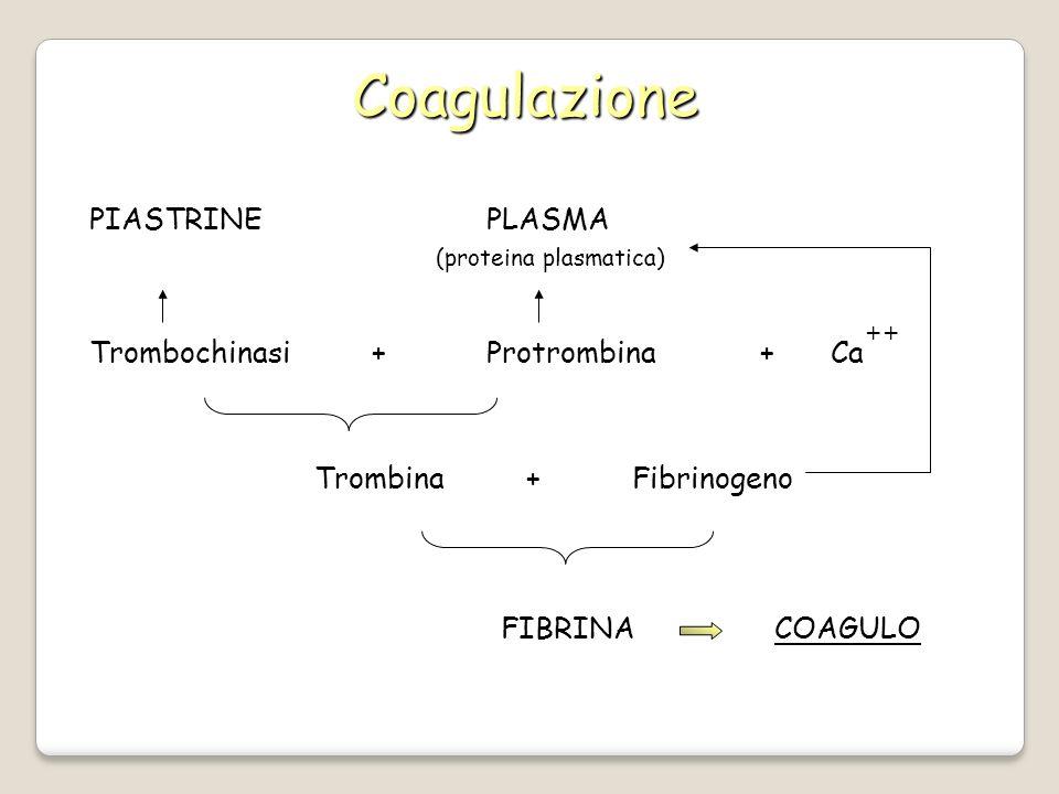 Coagulazione PIASTRINE PLASMA Trombochinasi + Protrombina +Ca ++ (proteina plasmatica) Trombina+Fibrinogeno COAGULO FIBRINA COAGULO