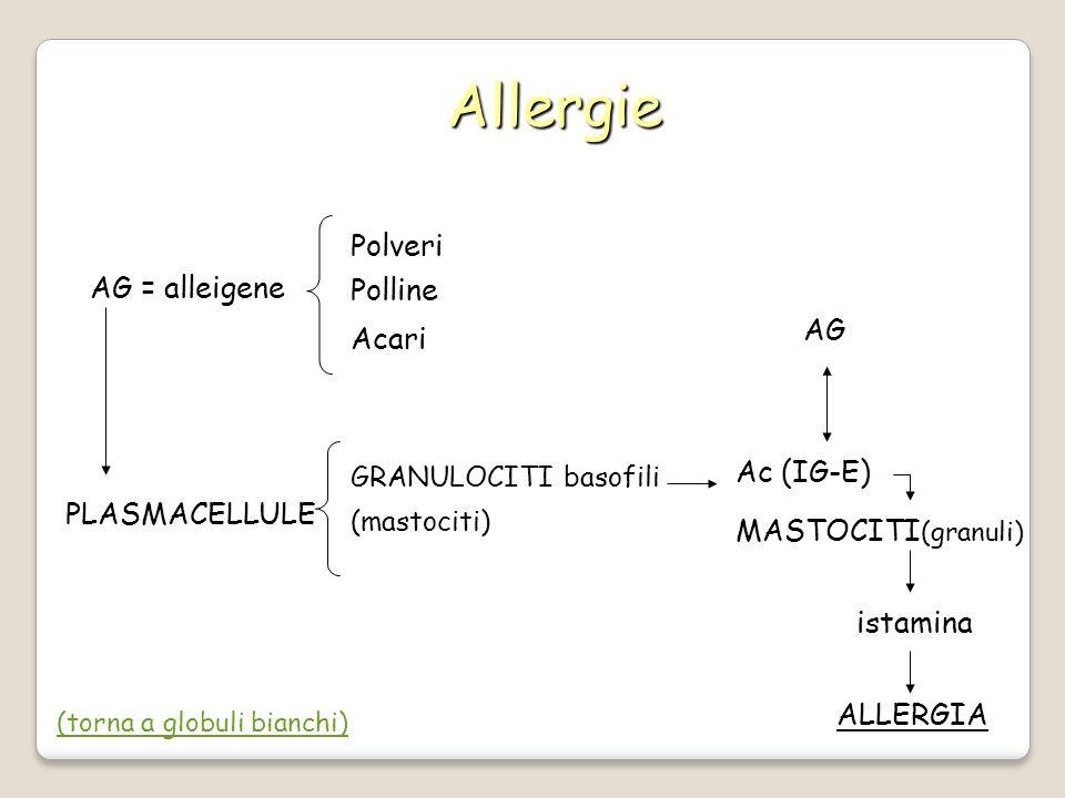 Allergie AG = alleigene Polveri Polline Acari PLASMACELLULE GRANULOCITI basofili (mastociti) Ac (IG-E) AG MASTOCITI (granuli) istamina ALLERGIA (torna