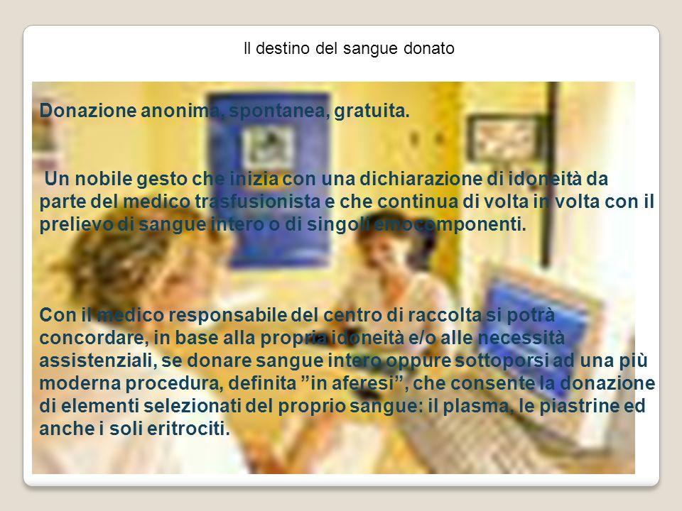 ll destino del sangue donato Donazione anonima, spontanea, gratuita. Un nobile gesto che inizia con una dichiarazione di idoneità da parte del medico