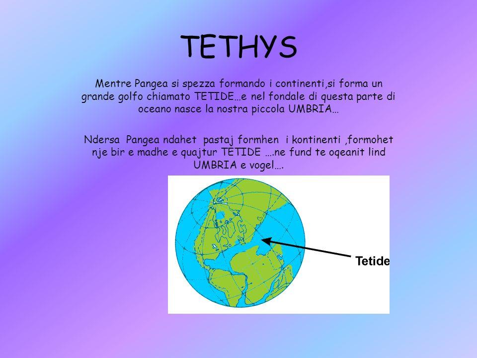 TETHYS Mentre Pangea si spezza formando i continenti,si forma un grande golfo chiamato TETIDE…e nel fondale di questa parte di oceano nasce la nostra