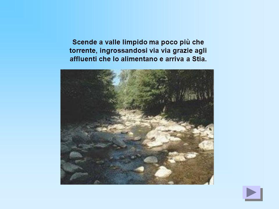 Scende a valle limpido ma poco più che torrente, ingrossandosi via via grazie agli affluenti che lo alimentano e arriva a Stia.