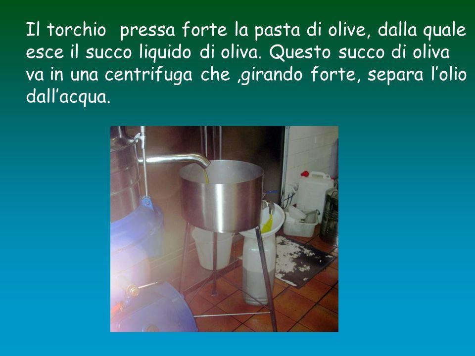 Il torchio pressa forte la pasta di olive, dalla quale esce il succo liquido di oliva. Questo succo di oliva va in una centrifuga che,girando forte, s