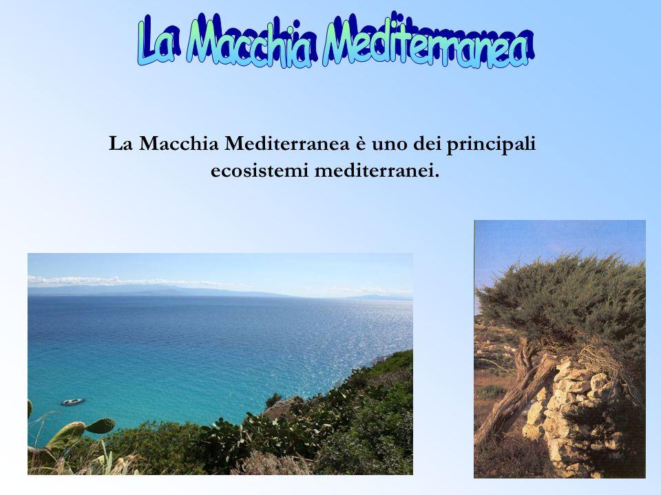 La Macchia Mediterranea è uno dei principali ecosistemi mediterranei.