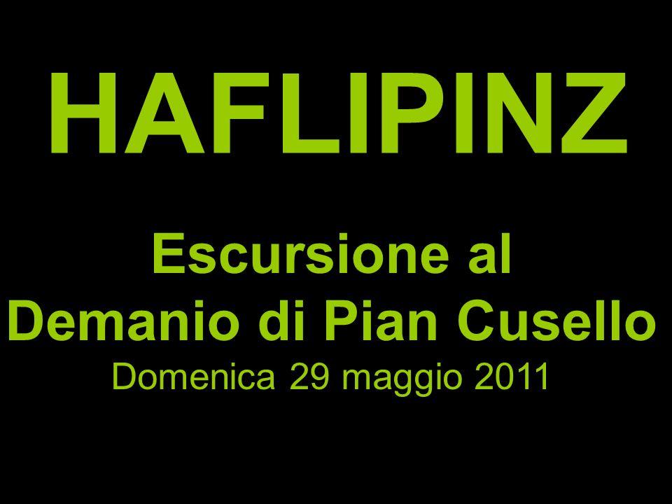 HAFLIPINZ Escursione al Demanio di Pian Cusello Domenica 29 maggio 2011