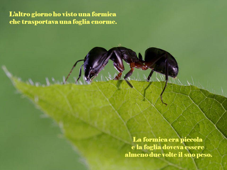 Laltro giorno ho visto una formica che trasportava una foglia enorme.