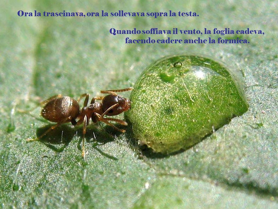Laltro giorno ho visto una formica che trasportava una foglia enorme. La formica era piccola e la foglia doveva essere almeno due volte il suo peso.