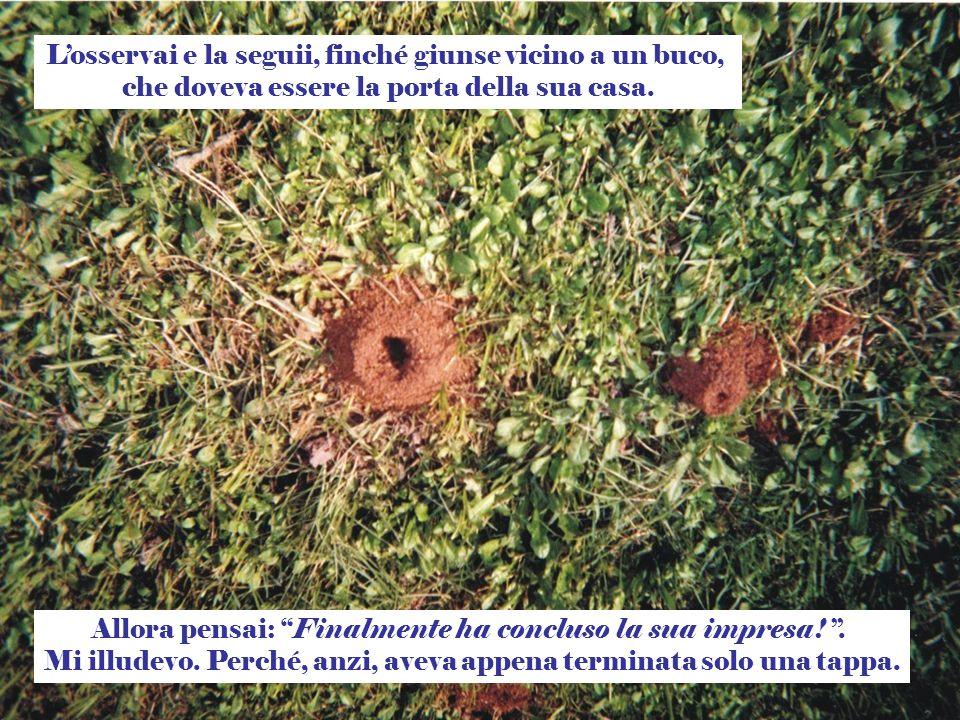 La gioia delle larve, che probabilmente aspettavano il cibo allinterno, ha spinto quella formica a sforzarsi e superare tutte le avversità della strada.