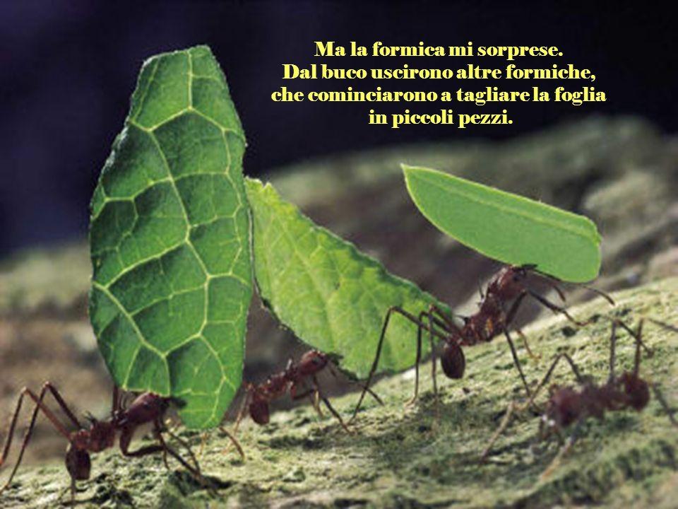 La foglia era molto più grande del foro, per cui la formica lasciò la foglia ed entrò da sola. Così mi dissi: Poverina, tanto sacrificio per nulla.