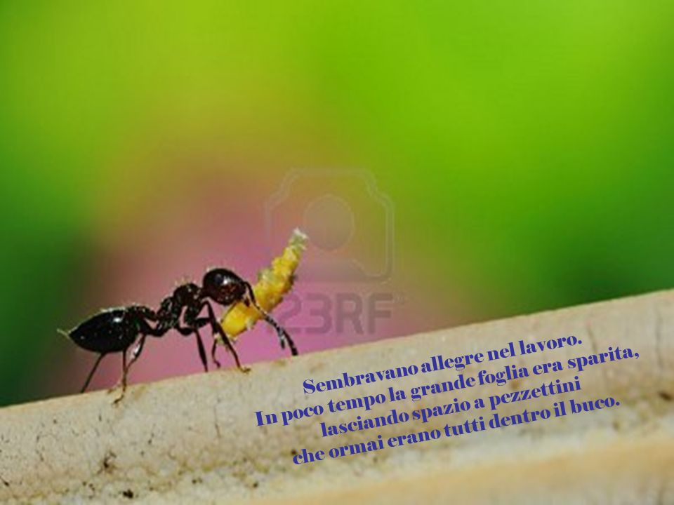 Ma la formica mi sorprese. Dal buco uscirono altre formiche, che cominciarono a tagliare la foglia in piccoli pezzi.