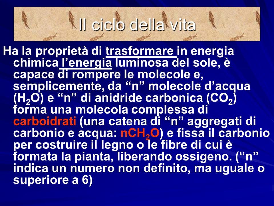 Alla base della alimentazione cè la CLOROFILLA: una sostanza straordinaria. Cosa ha di straordinario la clorofilla? La clorofilla è capace, unica al m