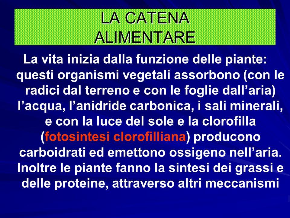 Gli animali e gli uomini NON SONO CAPACI di produrre questo alimento e, per procurarselo, debbono mangiare i vegetali che sono in grado di fabbricarlo