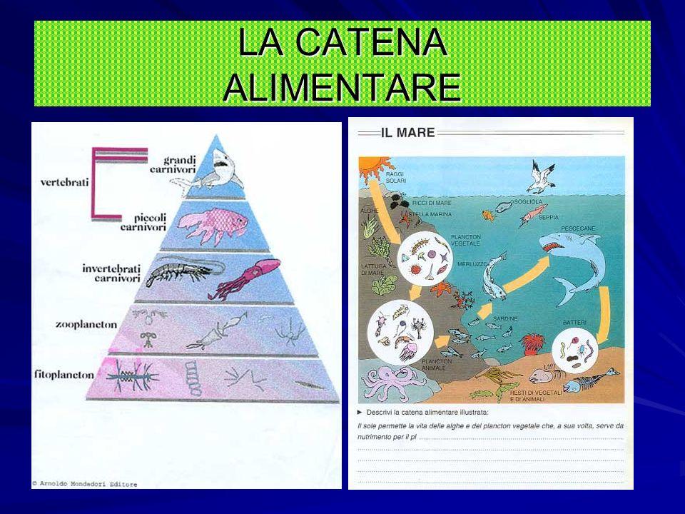 1.I sali minerali del terreno sono trasformati dalla pianta con laiuto dellenergia solare 2.Il frutto viene mangiato dal coniglio 3.La volpe mangia il