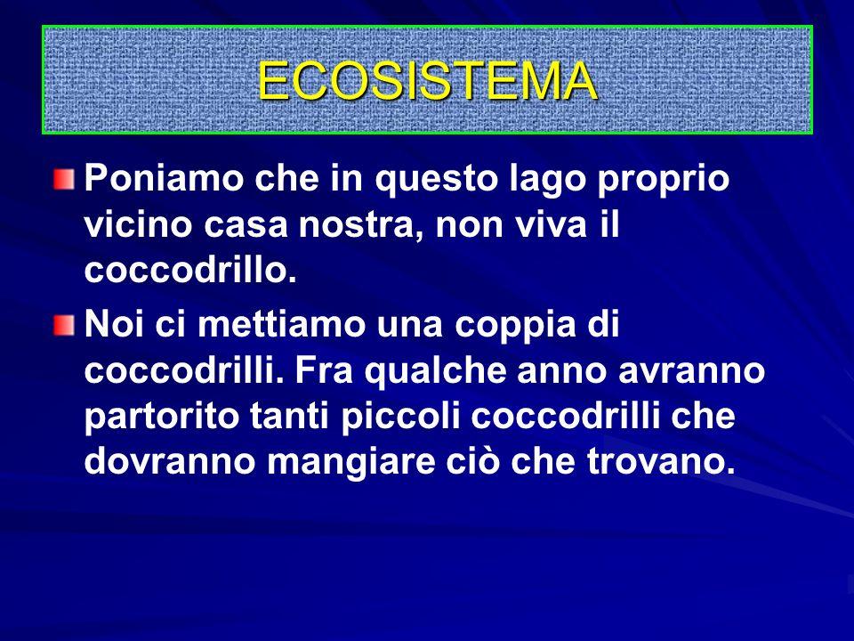L'ECOSISTEMA è una parte funzionale dove cè vita (biosfera) ma non autosufficiente; la sua maggiore dipendenza dal resto dell'universo riguarda la nec