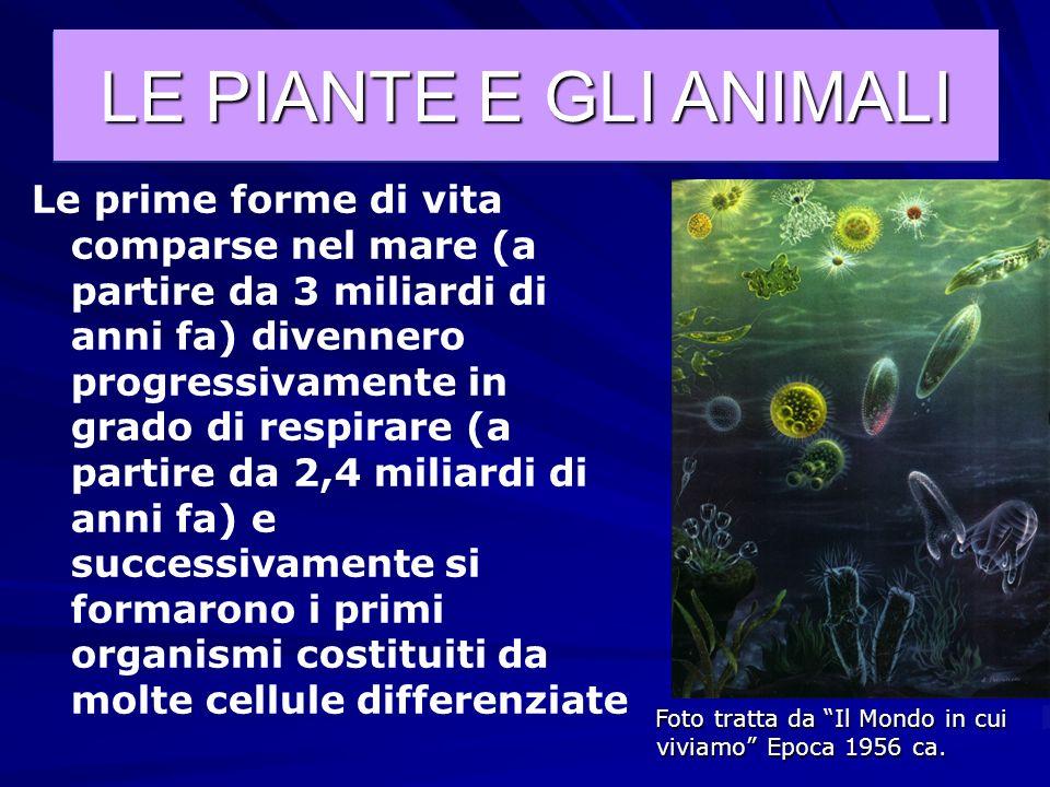 Successivamente comparvero le prime specie animali che si cibavano di piante perché, non essendo capaci di prepararsi da soli il nutrimento, gli anima