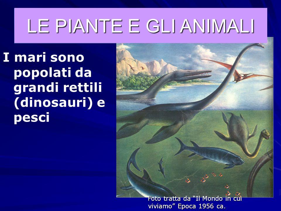 Foto tratta da Il Mondo in cui viviamo Epoca 1956 ca. LE PIANTE E GLI ANIMALI Le prime piante terrestri (400 milioni di anni fa); I primi animali anco