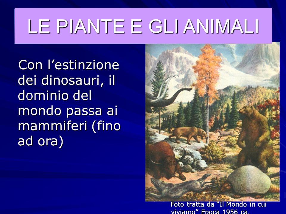 Foto tratta da Il Mondo in cui viviamo Epoca 1956 ca. LE PIANTE E GLI ANIMALI I dinosauri dominano il mondo (fino a 65 milioni di anni fa, quando un g
