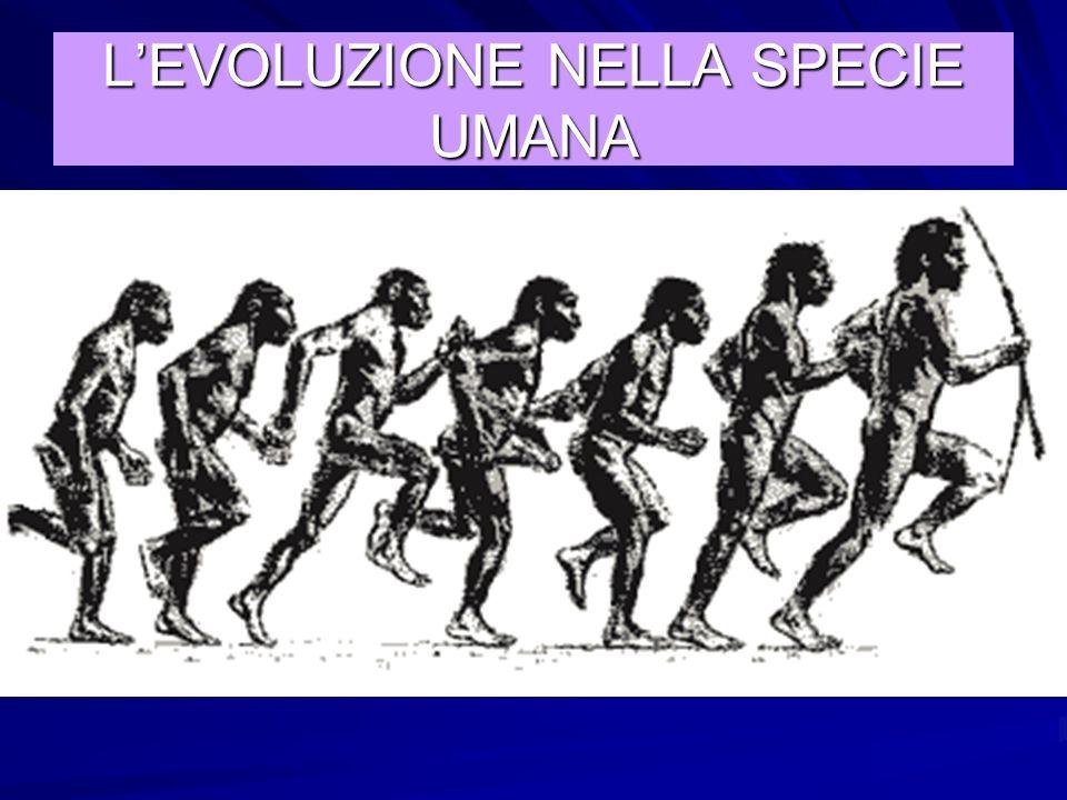 Nel giro di alcune centinaia di migliaia di anni la differenza tra queste e le altre scimmie aumentò sempre di più LEVOLUZIONE VERSO LA SPECIE UMANA