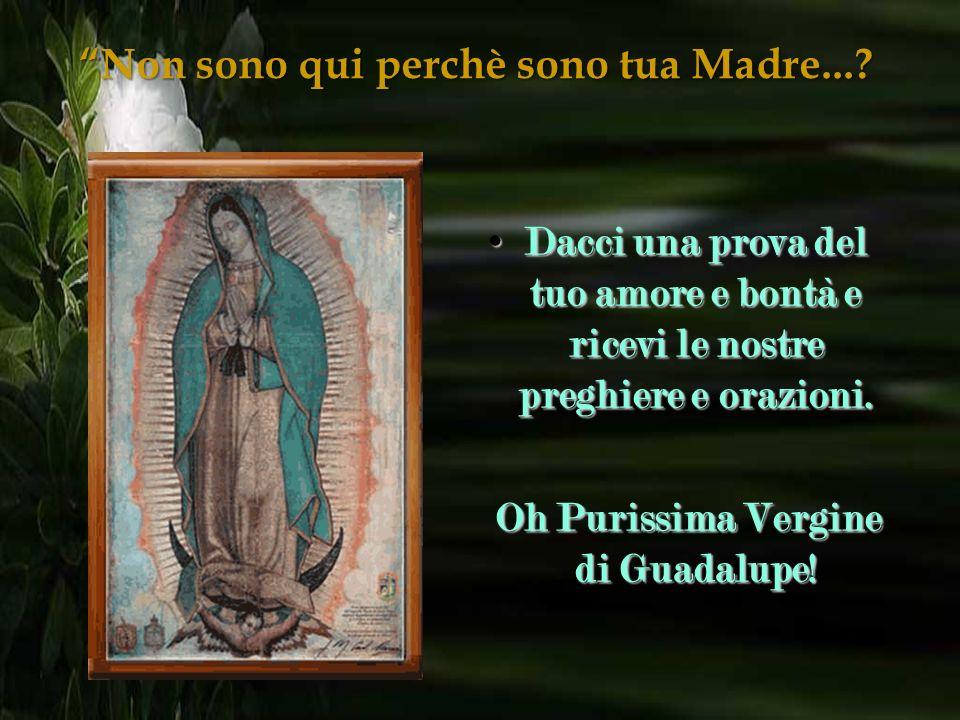 Non qui perchè sono tua Madre...? Non sono qui perchè sono tua Madre...? Preghiera alla Vergine di Guadalupe: Preghiera alla Vergine di Guadalupe: Ben