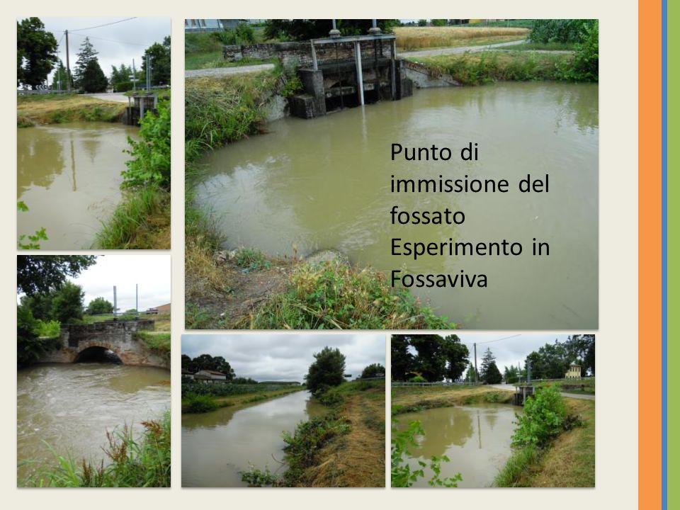 Punto di immissione del fossato Esperimento in Fossaviva