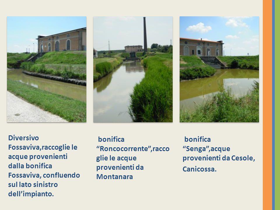 Diversivo Fossaviva,raccoglie le acque provenienti dalla bonifica Fossaviva, confluendo sul lato sinistro dellimpianto.
