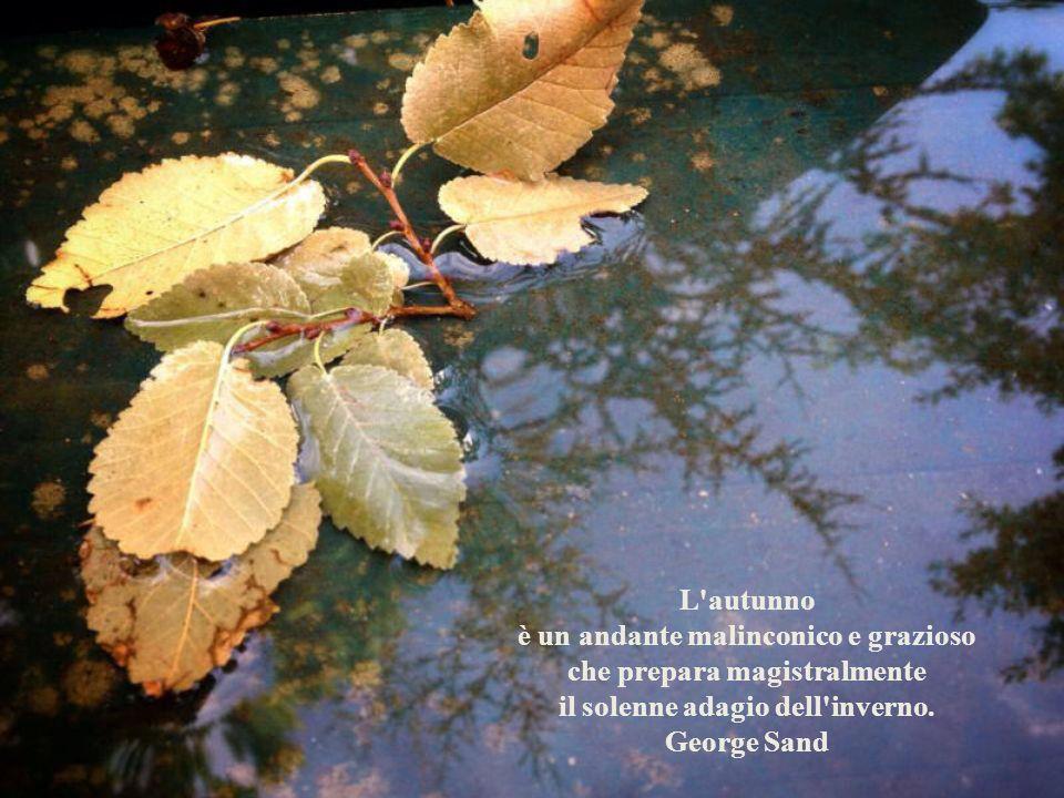 Le foglie ingiallite rappresentano lautunno con tutta lincertezza e la malinconia delle creature che ci abbandonano per sempre. Romano Battaglia - Fog